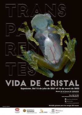 """Exposición: """"Transparentes. Vida de cristal"""""""