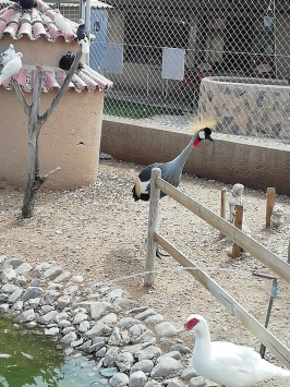 La Era de las Aves. Parque Zoológico
