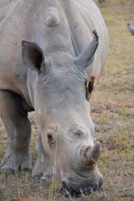 Premium African Safaris